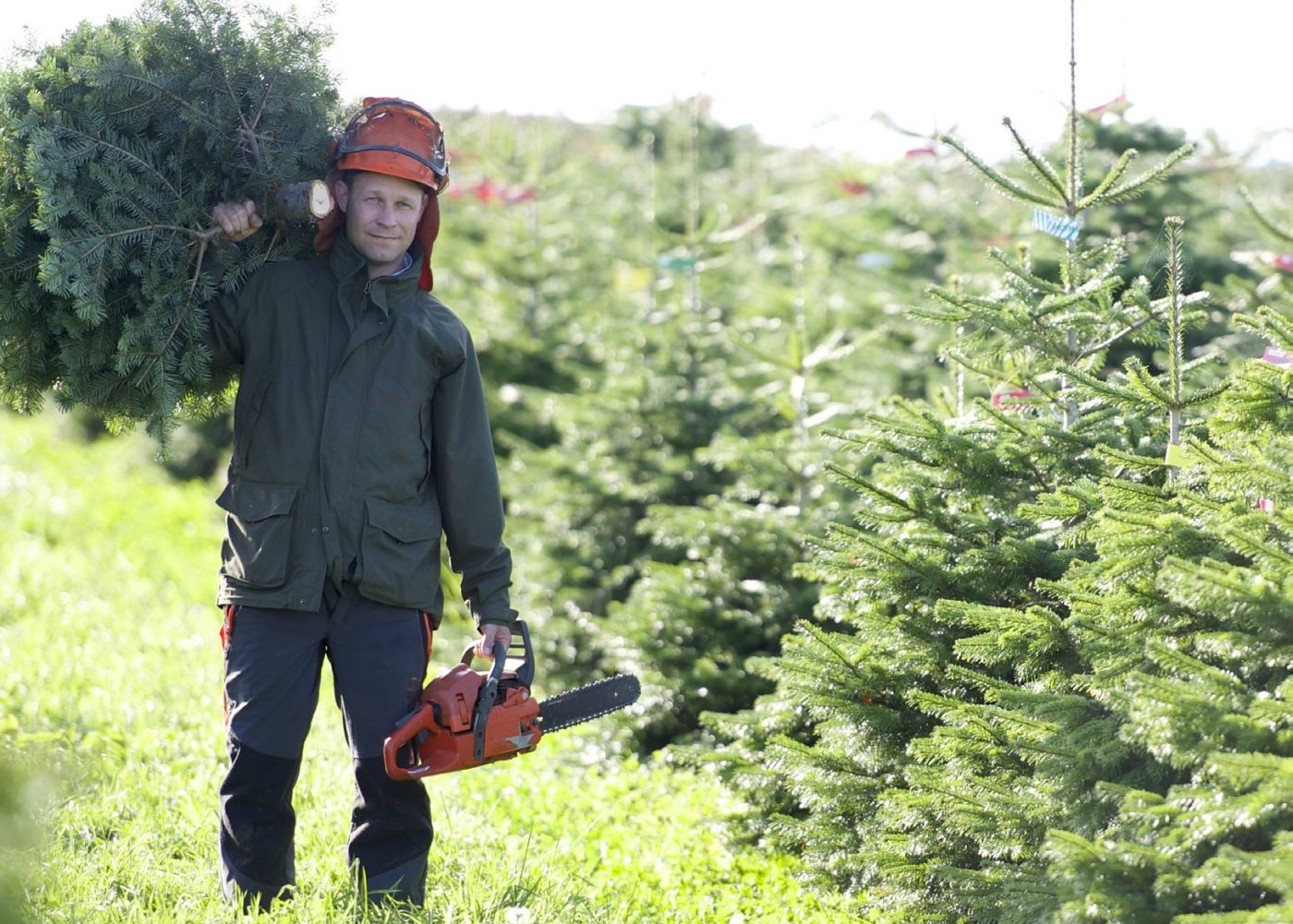 Christmas Tree Supply 2021 Premium Christmas Trees Reflects On 2020 Festive Season What It Means For Christmas Tree Sales In 2021 Local Gardener Newspaper
