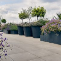 Roof Garden Design in London box 300
