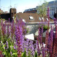 Weather Exposed Garden Design London planting