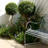 Dark and shaded garden design in London box 300