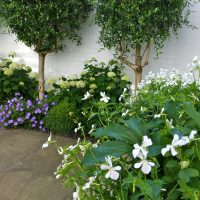 courtyard planting fresh and crisp in colour and focus