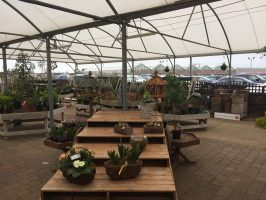 Bury lane farm shop and garden centre review