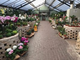 Harlow Garden Centre review