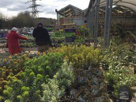 Hilliers Garden Centre Hemel Hempstead review